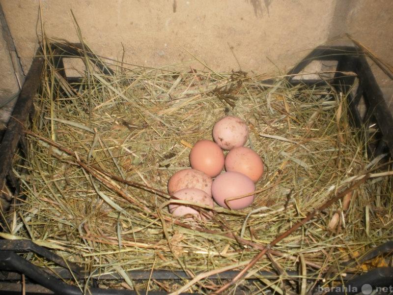 Продам Яйца домашние куриные диетические