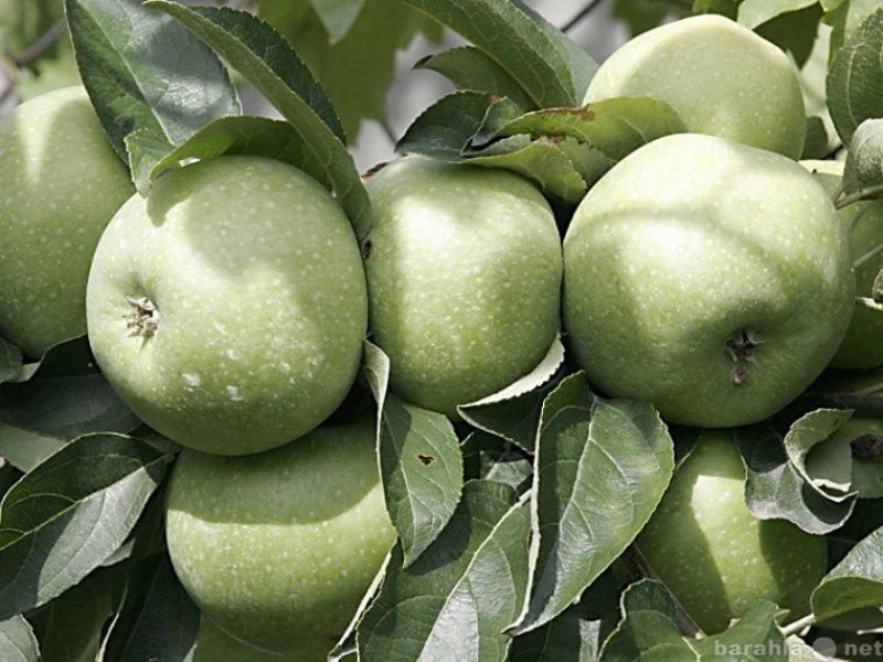 Продам Овощи и фрукты из Краснодара