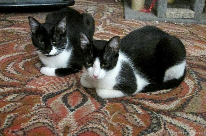 Отдам даром: Прелестные сестренки-маркизы ищут дом.