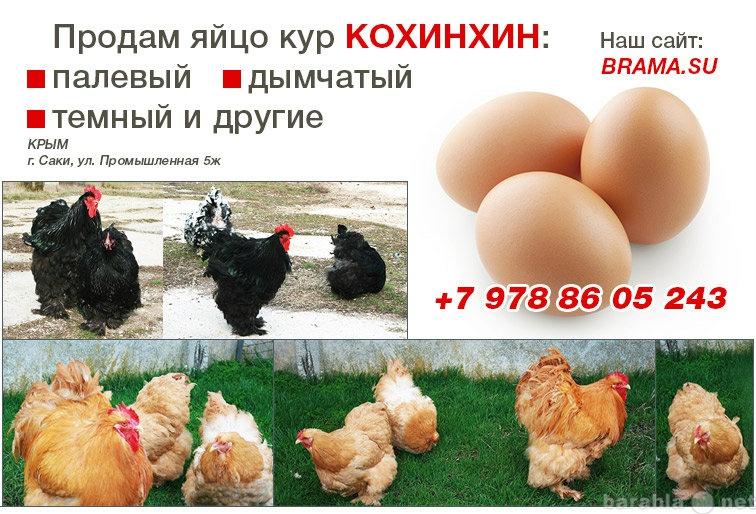 Продам Инкубационное яйцо кохинхин