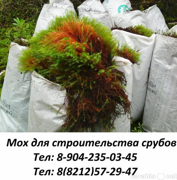 Продам Мох строительный+доставка тел:57-29-47