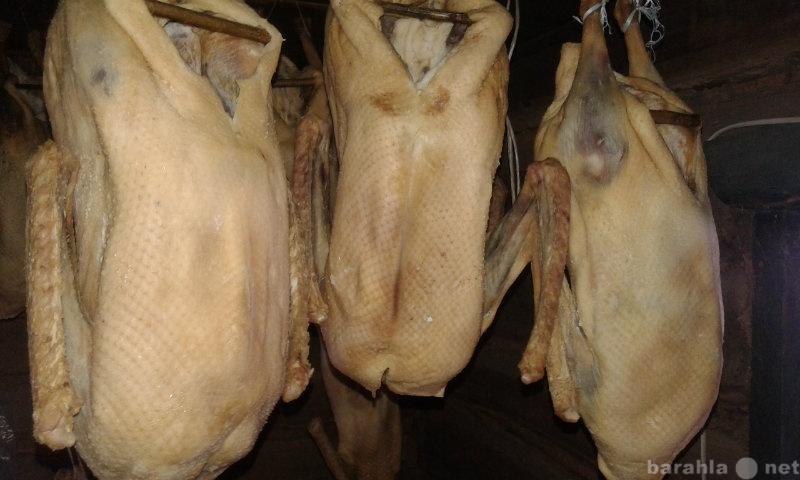 Продам Мясо гуся.Тушки/вяленые