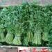 Продам Продаем зелень из Испании