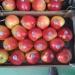 Продам Продаем яблоки из Испании