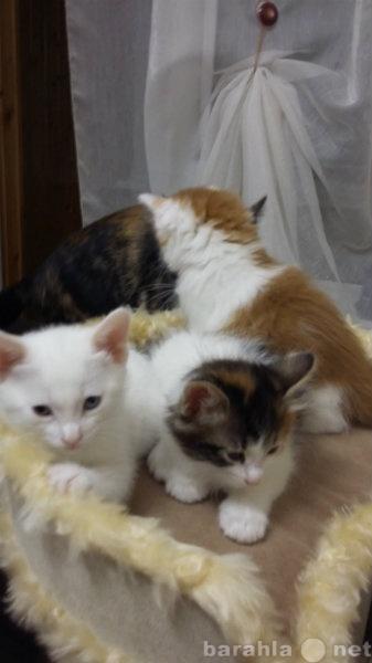 Продам Очаровательные котята
