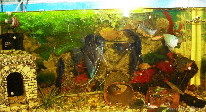 Продам аквариум JEBO с рыбками и оборудованием