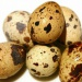 Продам Яйцо инкубационное перепелиное смесь