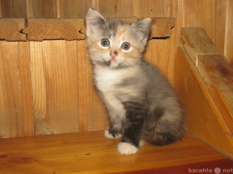 Отдам даром: котята 1,5мес