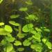Продам Креветки и аквариумные растения