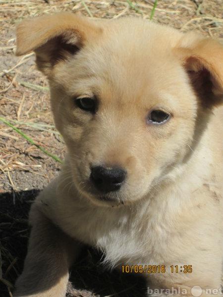 Отдам даром: замечательных щеночков