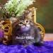 Продам Сибирские котята из питомника
