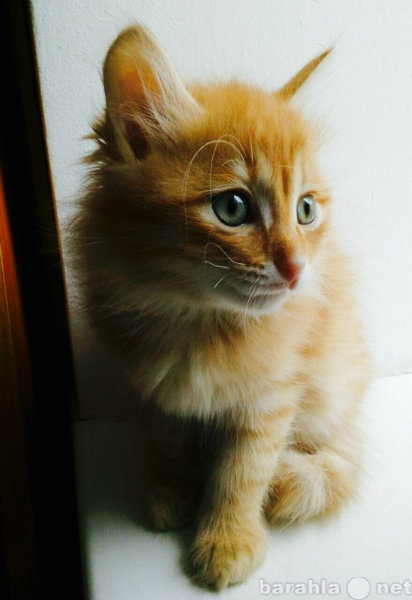 Отдам даром Любящая семья для 2-х котят