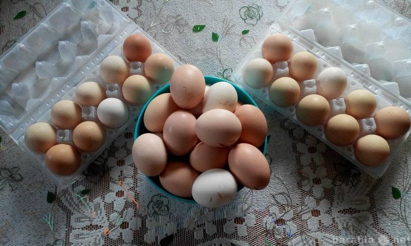 Продам Яйцо куриное, домашнее
