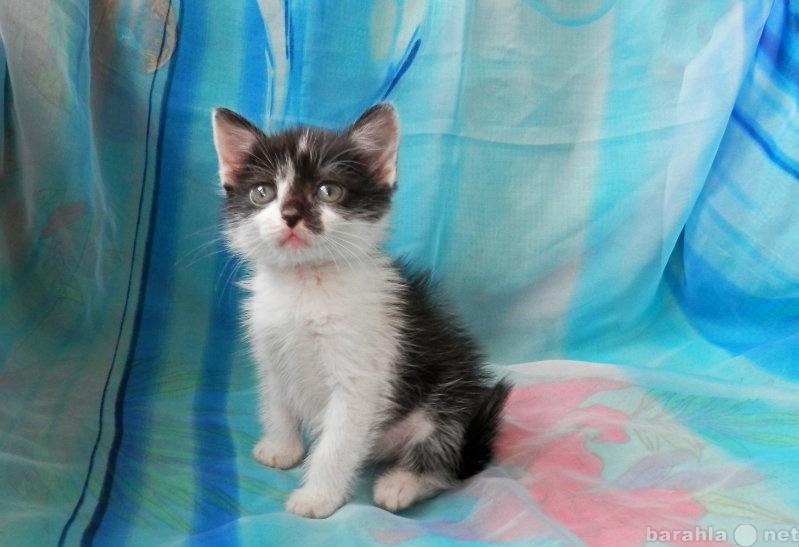 Отдам даром Чёрно-белый котенок в дар, с доставкой!