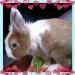 Продам Декоративный милый кролик