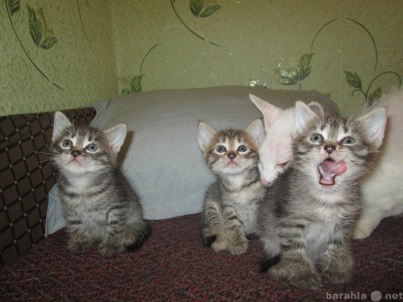 Отдам даром: котята мышеловки