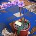 Продам Орхидеи из бисера, торг