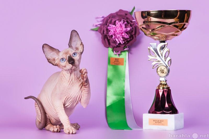 Продам: Cфинкс, это кошка с другой планеты.