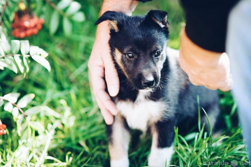 Отдам даром Красивый, смышленный щенок