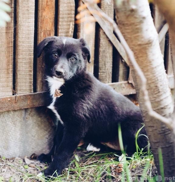 Отдам даром Щенку от крупной собаки нужен дом