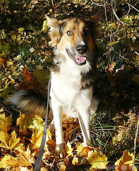 Отдам даром: Молодой красивый пес Форс