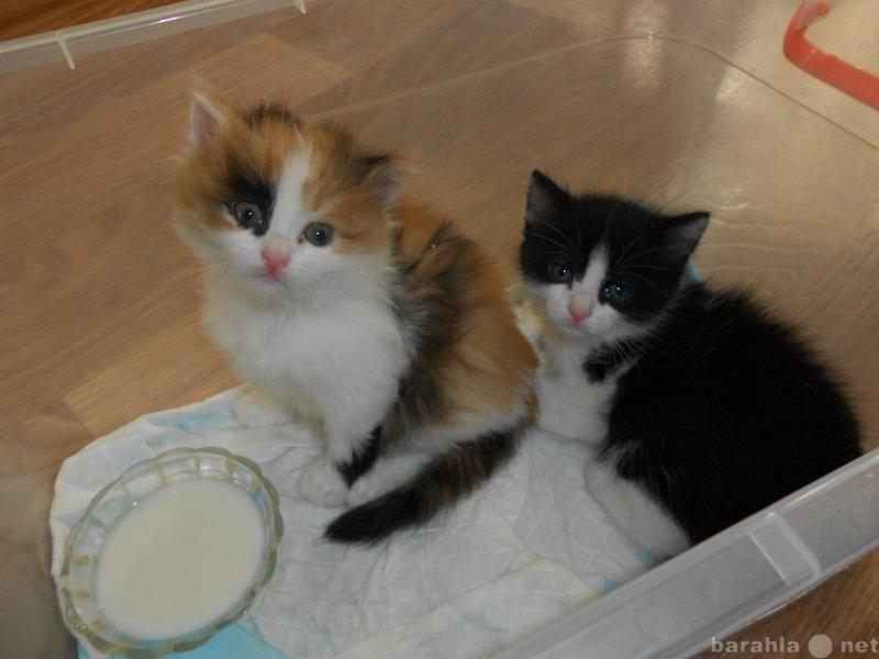 Взять котенка в челябинске бесплатео