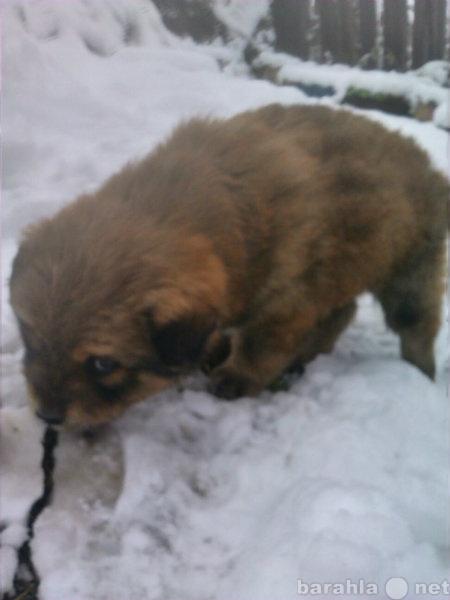 Где недорого купить милых щеночков в новокузнецке