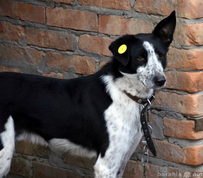 Отдам даром Красивый пес Султан ищет семью!