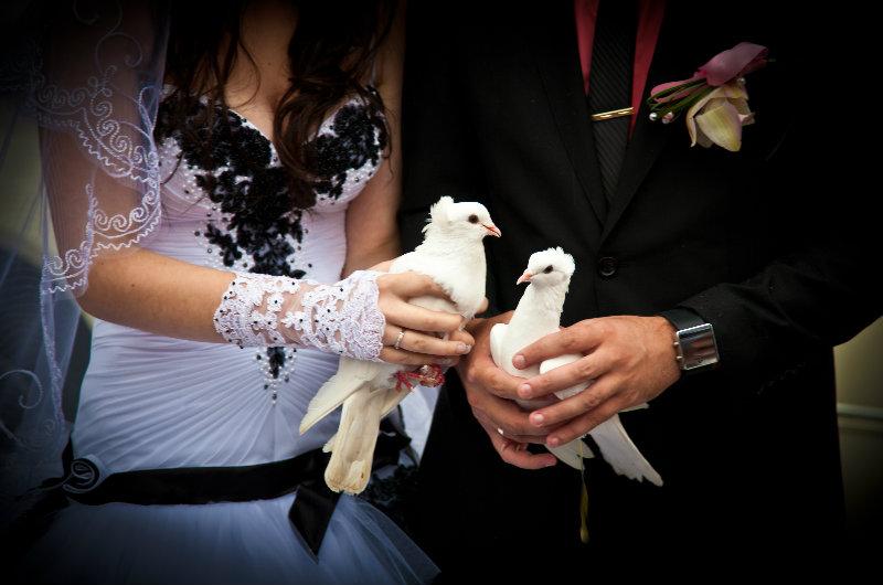 Предложение: Фотосъемка свадеб, фотосессии + слайдшоу