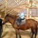 Предложение: Катание на санях,верховая езда.
