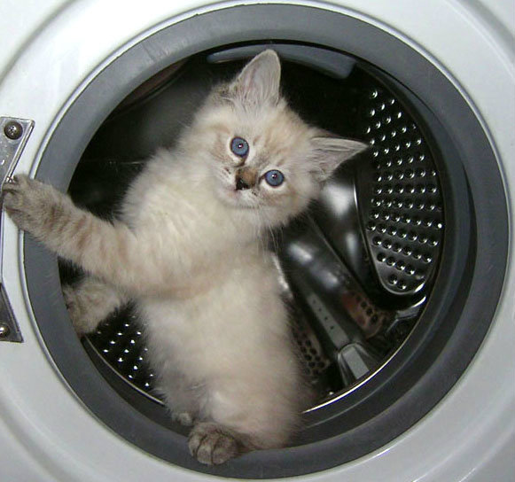 Предложение: Ремонт стиральных машин в Челябинске.