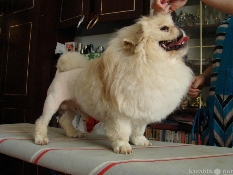 Предложение: Стрижка собак