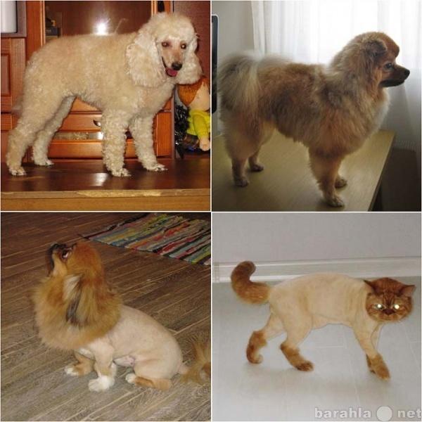 Предложение: Стрижка собак и кошек!!!
