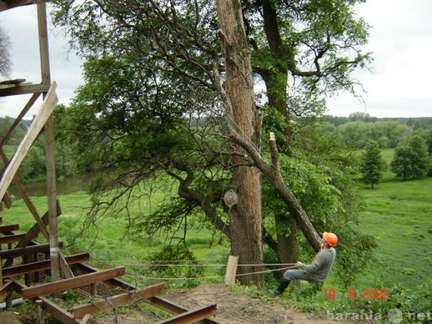 Предложение: Спил деревьев, корчевка пней