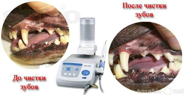 Предложение: Чистка зубов с помощью ультразвука