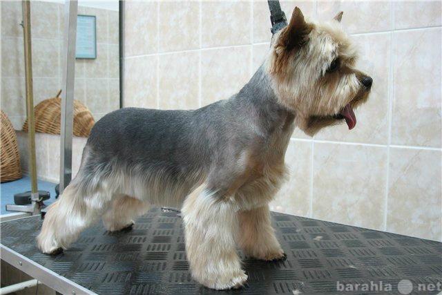 Предложение: стрижка собак с выездом на дом