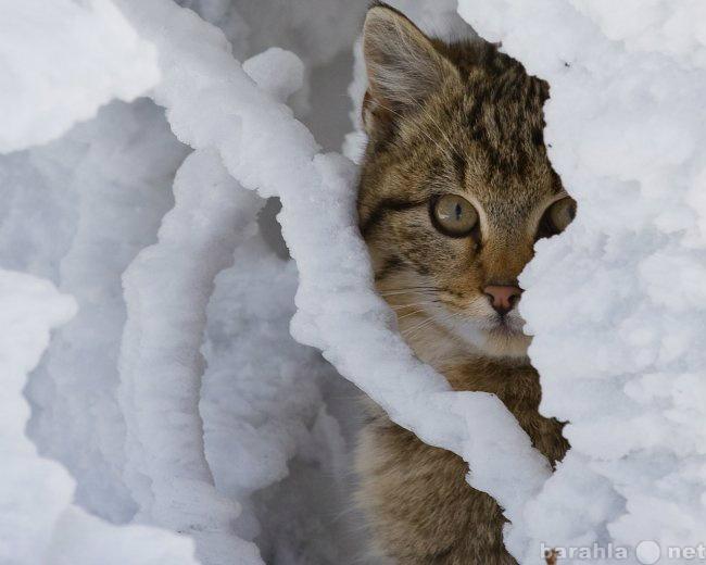 Предложение: Уборка снега в Ниж. Новгороде89875421535