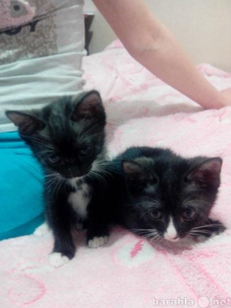 Предложение: Приютите прелестных котят