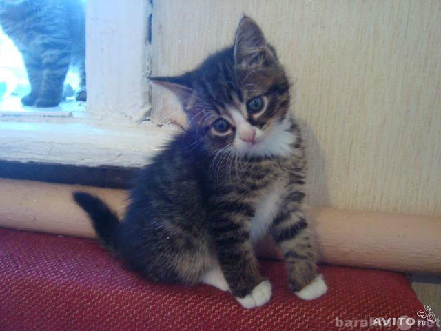 Предложение: Котята в добрые руки