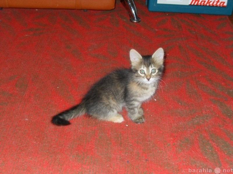Предложение: котята даром