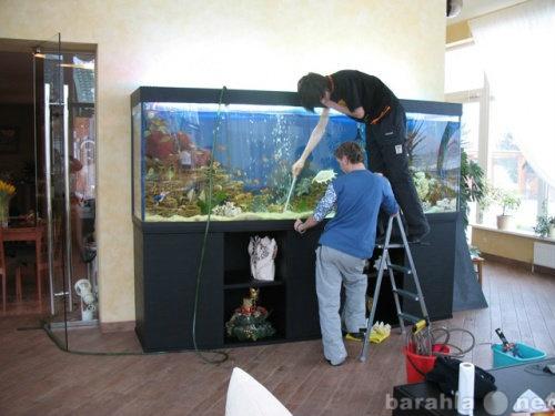 Предложение: Обслуживание аквариумов