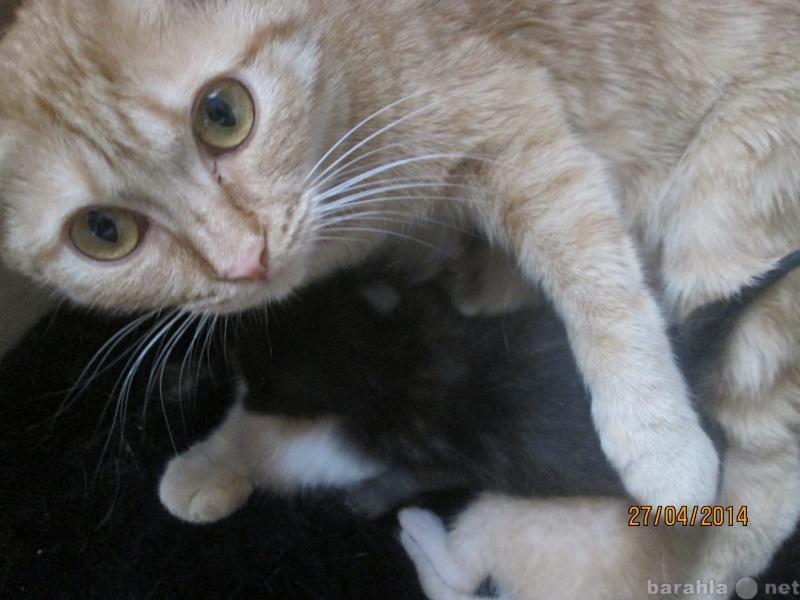 Предложение: Гостиница для кошек