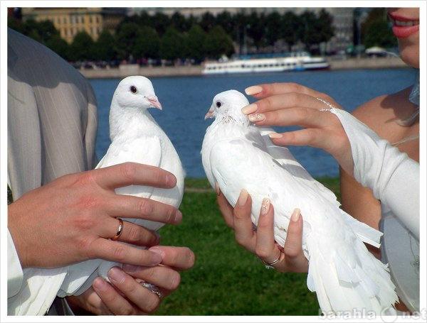 Предложение: Белые Голуби на свадьбу