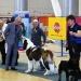 Предложение: Шоу-тренинг, ОКП всех пород собак