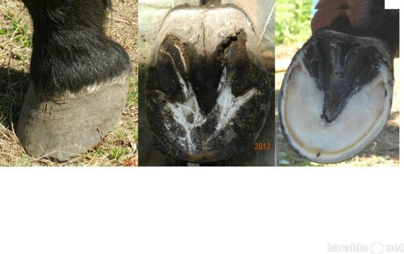 Предложение: Ковка и расчистка лошадей