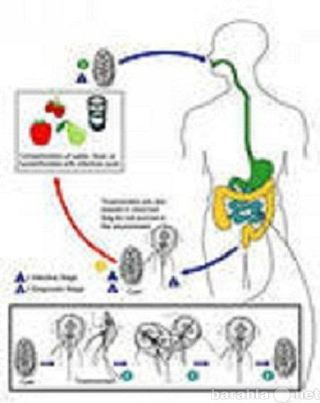 Предложение: Обследование на паразитов