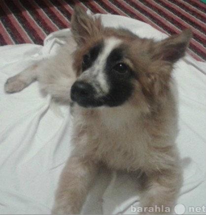 Предложение: Ласковая,добрая собачка ищет хозяина!