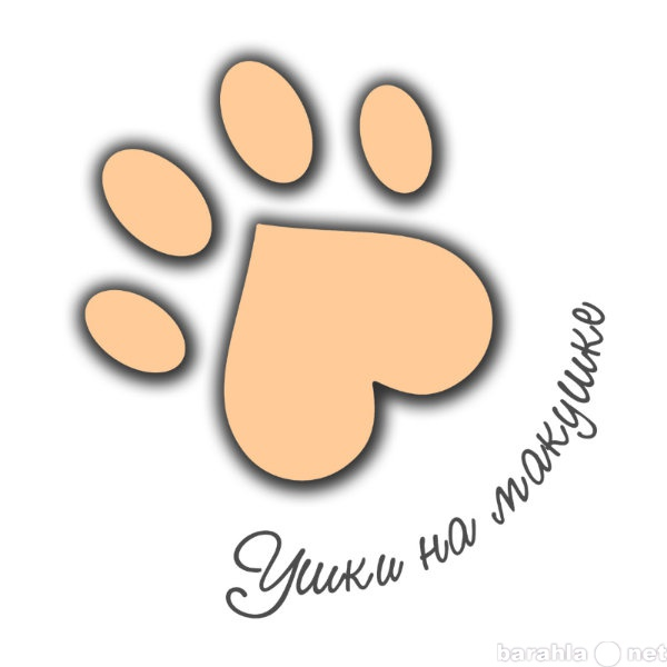 Предложение: Стрижка собак декоративных пород