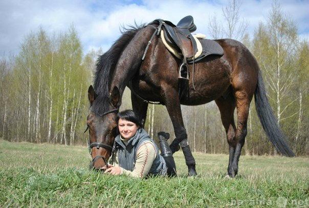 Предложение: Конные прогулки, фотосеты, обучение верх