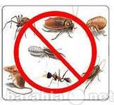 Предложение: Уничтожение насекомых,крыс,дезинфекция.